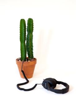 http://lindsaymrobbins.com/files/gimgs/th-45_cactus4_small_v2.jpg